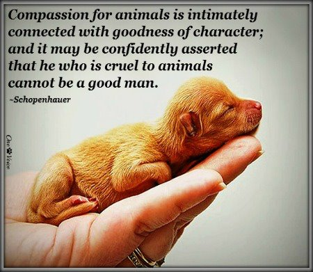 Kindness To Animals Love Quotes Cherie Roe Dirksen